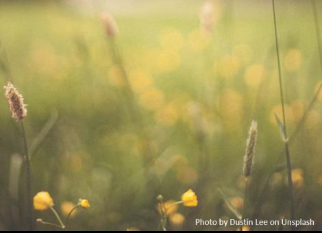 wildflower in field